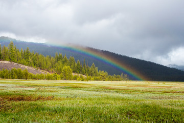 Rainbow Adds Color to Meadows and Forest