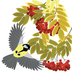 Rowan branches and titmouse