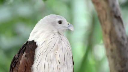 closeup scene of hawk, the powerful predator