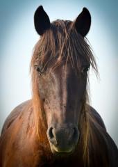 Wonderful closeup photo of brown horse muzzle