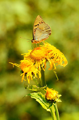 Butterfly on a wildflower at summer