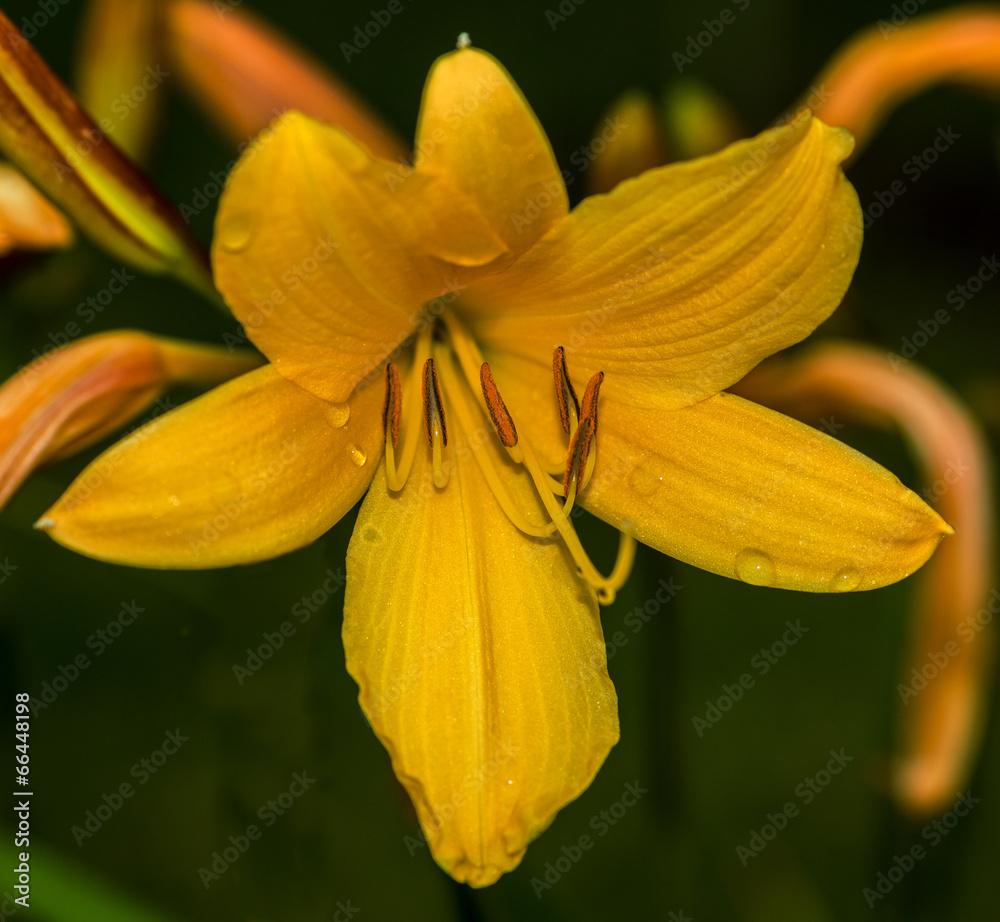 roślina żółty zielony - powiększenie