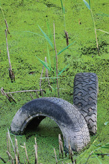 Discarded old tyres in contaminated pond puddle, water pollution