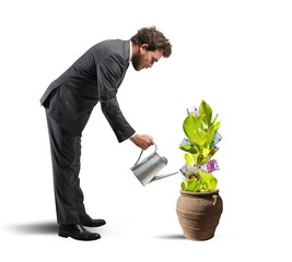 Businessman with a plant of money