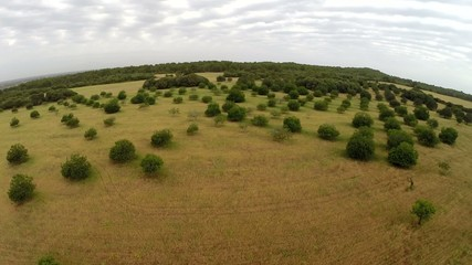 Balearic Nature of Trees and Fields - Aerial Flight, Mallorca