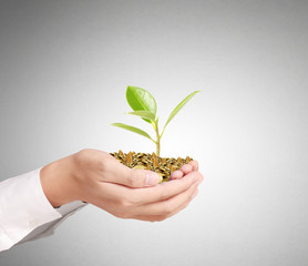 Businessman holding plant sprouting from  handful of coins