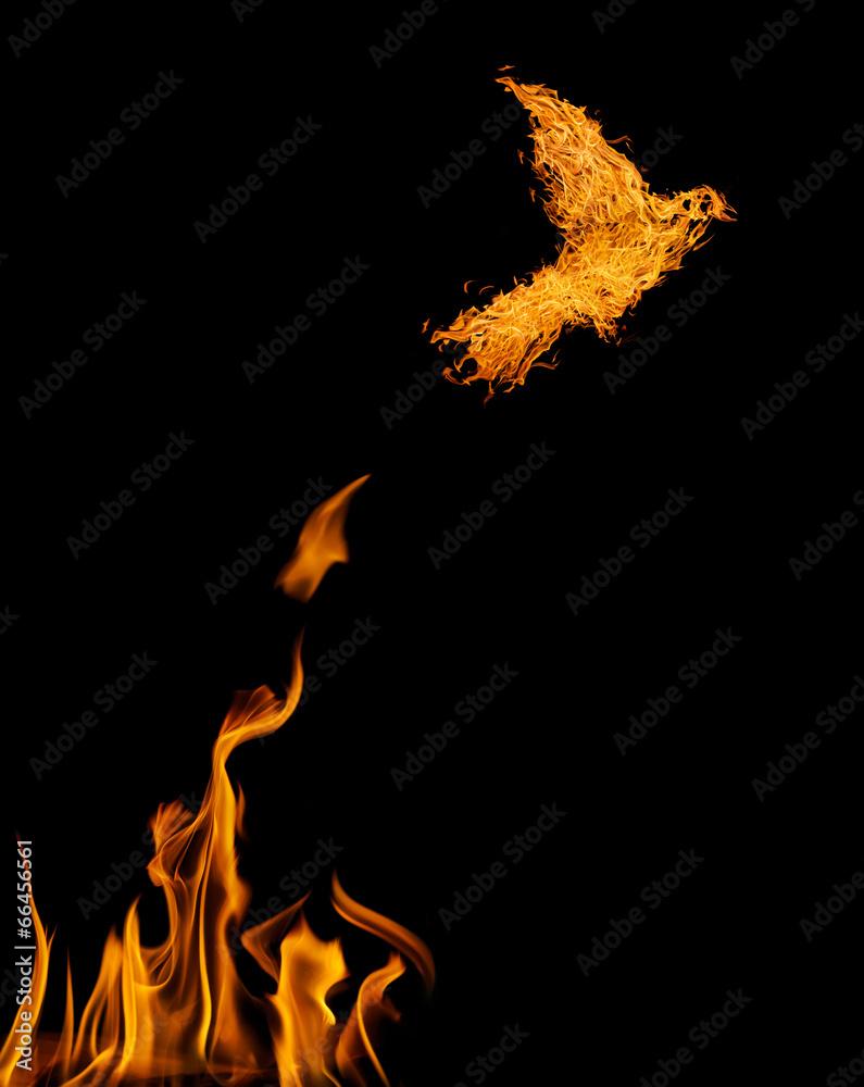 ogień feniks latający - powiększenie