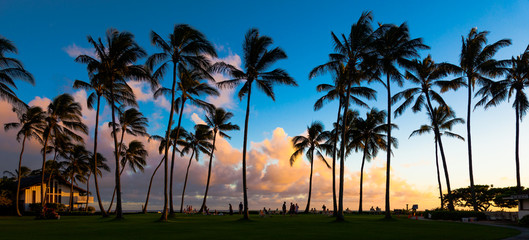Kauai Island Sunset with Palm Trees