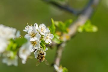 Flowering in macro