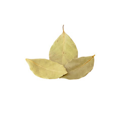 Three Dried bay leaves isolated on white