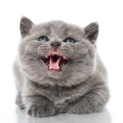 Kätzchen miaut