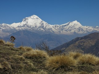 Dhaulagiri and Tukuche Peak, view from Mohare viewpoint