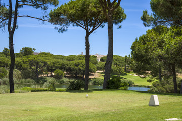 Golf course between pine trees without players