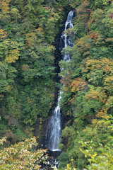 Waterfall amid autumnal forest, Miyagi Prefecture, Japan
