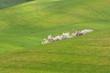paesaggio toscano colline valle d'orcia