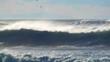 Ocean waves seabird sea spray birds