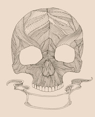 human skull with ribbon for your text, engraved style
