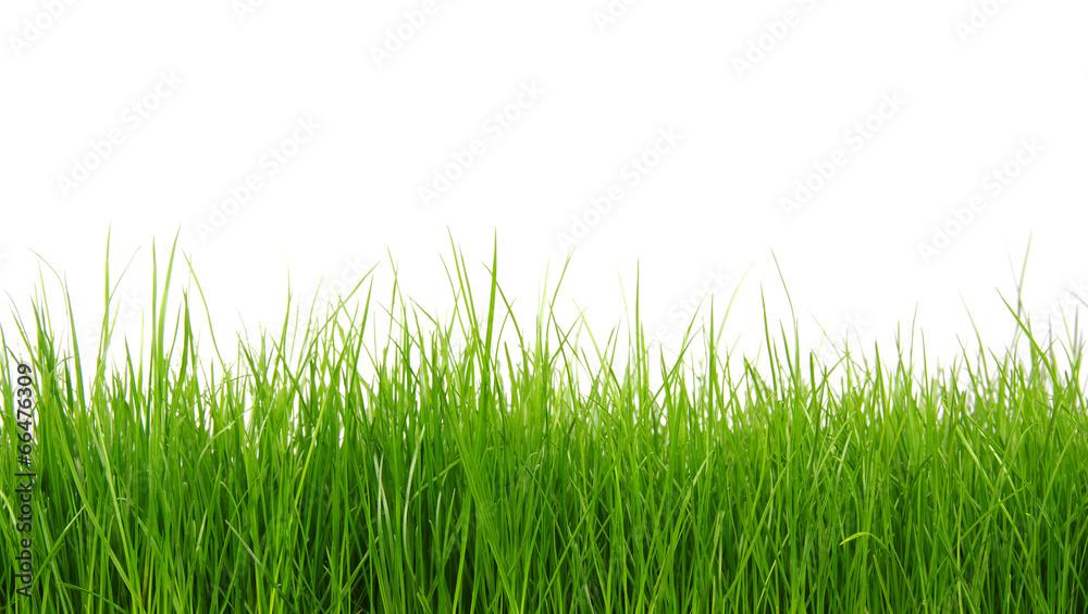 trawnik tło ogród - powiększenie