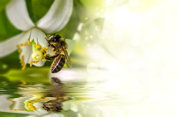 Bee bee->Pollination