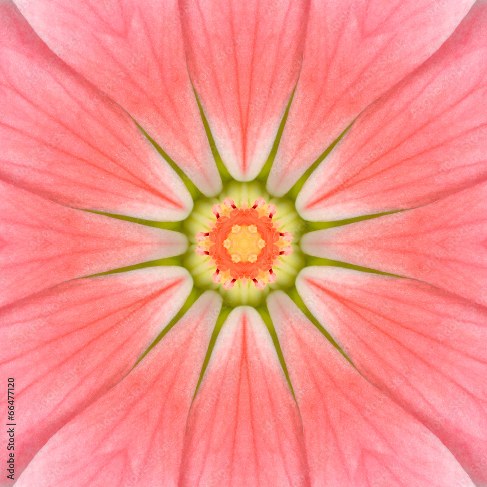 mandala kwiat centrum - powiększenie