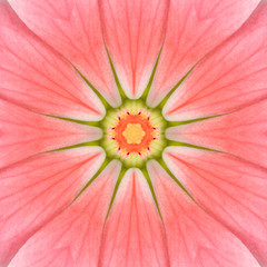 Pink Mandala Concentric Flower Center Kaleidoscope