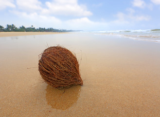 coconut on ocean beach