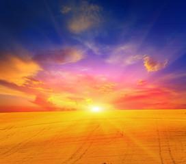 rape field and sunset sky