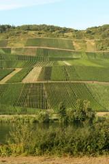 Weinanbau an der Mosel