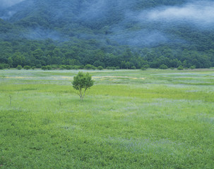 Misty field, Nikko, Tochigi Prefecture, Japan