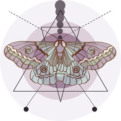 Hipster old fashion background with moth