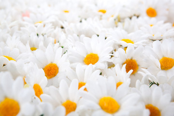background of artificial daisies