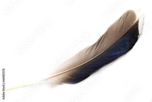 Foto op Plexiglas Zwaan feather on white background
