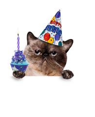 Birthday cat .