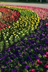 Colourful flowerbed as background