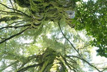 Tree trunks, close up