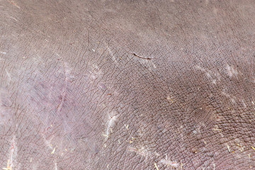 background of hippopotamus skin