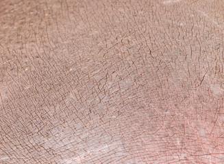background of hippopotamus skin