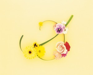 Rose, pansy, begonia, and daffodil, colored background