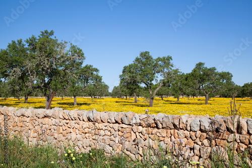 canvas print picture Frühling auf Mallorca