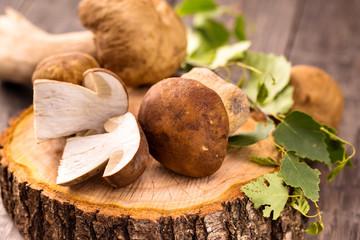 Wild mushrooms.Cep