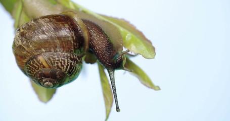 The slow motion of a slug in the leaf 4K RAW FS700 Odyssey 7Q