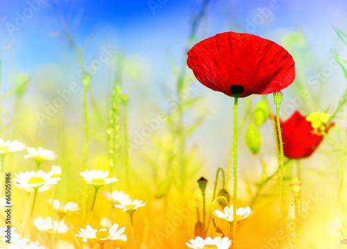 Obraz na Plexi wild flowers