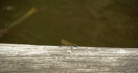A dragonfly sticking on the wood 4K RAW FS700 Odyssey 7Q