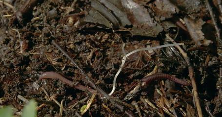 rown worms crawling on the dirt 4K RAW FS700 Odyssey 7Q