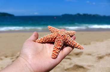Hand holding a starfish on the beach