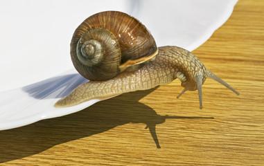 Wine snail.