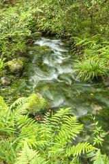 緑の中の山吹水源の流水