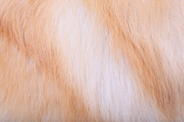 textured dog hair background, Animal fur