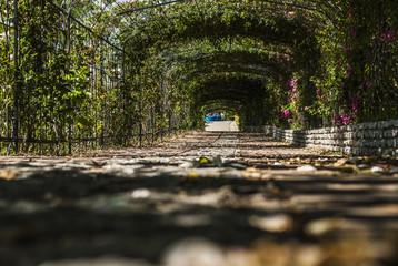 Tunnel delle rose