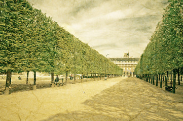 """Sculpted trees alley in the garden of """"Palais Royal"""" in Paris"""
